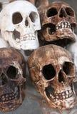 Skulls. Four fake skulls made of plaster Royalty Free Stock Photography