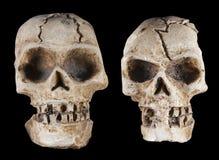 Free Skulls Stock Image - 25465141