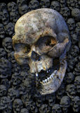 Skulls. 3d rendered illustration, detailed handpainted textures Royalty Free Stock Images