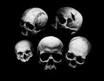 Skulls. Assortment of different kind of human skulls Stock Image