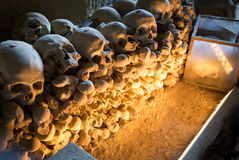 skulls fotos de stock royalty free