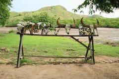 Skulls of animals killed by Komodo dragon. Skulls of animals - buffalos, deers and others - killed by Komodo dragon - Rinca Pulau, Flores, Indonesia Royalty Free Stock Photo
