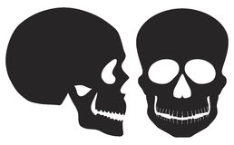 Skulls Black and White Front and Side View. Skulls Front and Side View Black and White Illustration Isolated on White Background Stock Images