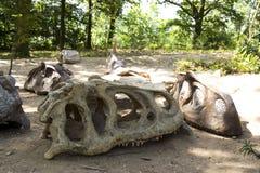 Skulls and bones. Excavated skulls and bones of dinosaurs Royalty Free Stock Image
