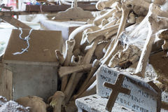 Skulls and bones Stock Image