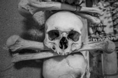 Skulls and bones on a wall, scary concept, real human skull. Skulls and bones on a wall, scary concept royalty free stock photo