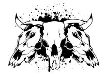 Skulls bulls Royalty Free Stock Photo