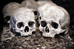 Skulls and coins Royalty Free Stock Image