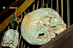 Skulls in a Dayak village, Borneo, Malaysia Stock Images