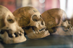 Skulls of dead people Stock Photography