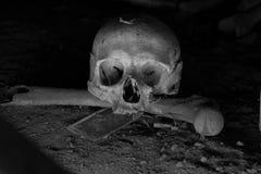 Skulls Stock Photos