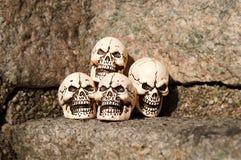 Skulls. Four skulls on a stony background Stock Images