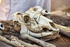 Skulls Royalty Free Stock Photography