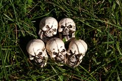 Skulls in the grass. Royalty Free Stock Image
