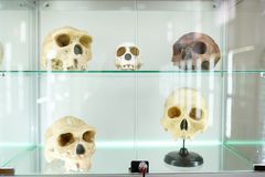 Skulls human anatomy . part of human body on light background. medical science museum stock images