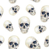 Skulls human person is isolated on a white background. Watercolor drawing. stock illustration