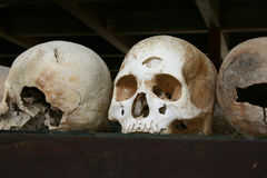 Skulls - Killing Fields, Cambodia Royalty Free Stock Images