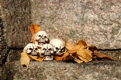 Skulls and leaves. Skulls lying in the fallen leaves Royalty Free Stock Image