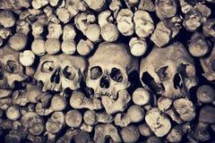 SKULLS. A lot of real skulls Royalty Free Stock Image