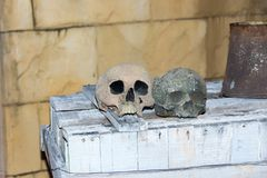 skulls placed on top of a table royalty free stock images