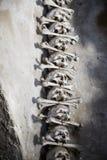 Skulls put together vertically with bones between Stock Photos