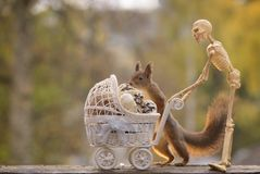 Skulls, red squirrel with a stroller and a skeleton Royalty Free Stock Photography