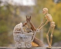 Skulls and squirrel on stroller and a skeleton behind Royalty Free Stock Photos