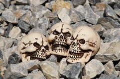 Skulls and stones. Three skulls lying in the stones Stock Photos