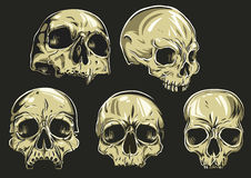 "Skulls Vector Set. Set of 5 skulls. To remove/change the fill color, just open the group of the skull (in Illustrator), select the ""color"" path and change Stock Photography"