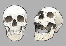 Skulls 03 Royalty Free Stock Photo