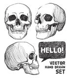 Skulls. Vintage Vector illustration Royalty Free Stock Photos