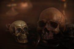 Skulls on the wooden floor. Stock Image