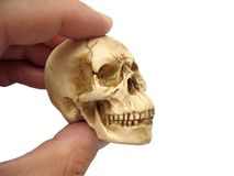 Skully Stock Photography