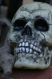 Skully i kumpel Fotografia Stock