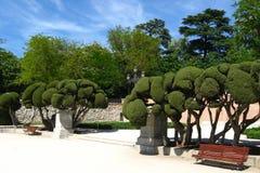 Skulpterade cypressträd i Buen Retiro allmänhet parkerar, Madrid, Spanien arkivbilder