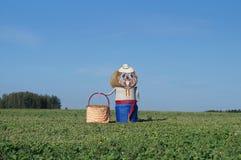 Skulptur av balsolomy-bäver Fotografering för Bildbyråer