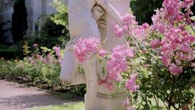 Skulptur av den stupade ängeln till och med blomningbuskar i rosträdgården lager videofilmer