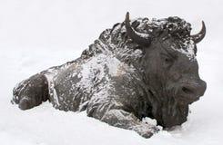 Skulptur av en tjur, Archeopark, Khanty - Mansiysk, Ryssland lokaliserade på foten av den is- kullen, Archeopark visar naturtroge Arkivbilder