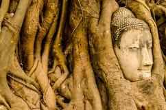 Skulptur der alte Baum und des Buddha-Steins Ayutthaya Lizenzfreie Stockfotos