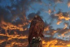 Skulptur des Adlers Stockfotos