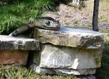 Skulptur för BoaConstrictor royaltyfri bild
