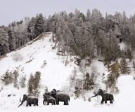 Skulpturer av mammoths i Archeopark, Khanty - Mansiysk, Ryssland lokaliserade på foten av den is- kullen, Archeopark visar naturt Royaltyfri Bild