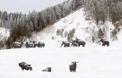 Skulpturer av mammoths i Archeopark, Khanty - Mansiysk, Ryssland lokaliserade på foten av den is- kullen, Archeopark visar naturt Fotografering för Bildbyråer