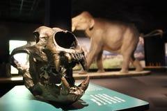 Skulpturer av mammoths och elefanter royaltyfria bilder