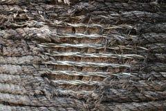 Skulpturrepet bands till ett träd, tiderna efter Thailand Arkivfoton