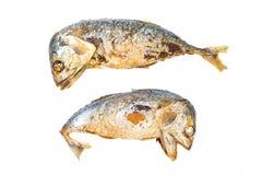 Skumbriowi fishs Zdjęcie Royalty Free