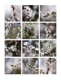 Skummar av våren Royaltyfria Bilder