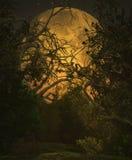 skuner krajobrazu światło księżyca Fotografia Royalty Free