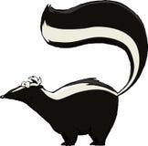skunk stock illustrationer