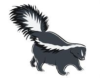 Skunk royalty free stock image